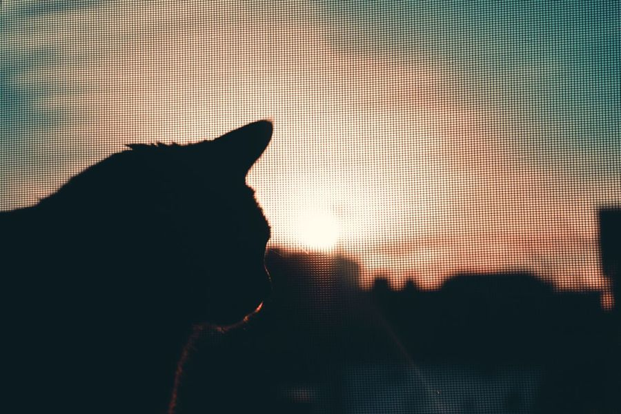 Cat Cats Cats Of EyeEm Cats 🐱 Cats Lovers  Cat♡ Cat Lovers Catlovers Animal Animals Sunset_collection Silhouette Silhoutte Photography Pets My Pets My Pet
