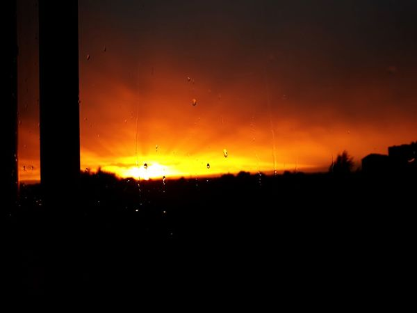 Tree Sunset Silhouette Sky Landscape