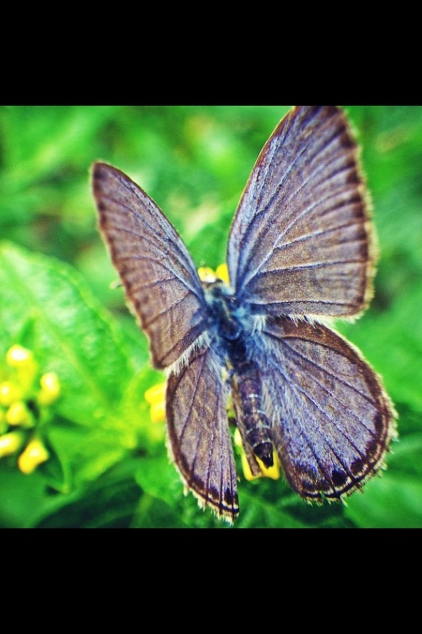 insect, one animal, animal themes, animals in the wild, wildlife, butterfly, transfer print, butterfly - insect, animal wing, close-up, auto post production filter, focus on foreground, full length, nature, leaf, natural pattern, perching, beauty in nature, plant, animal antenna