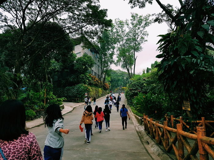 Rear view of people walking on footpath amidst trees