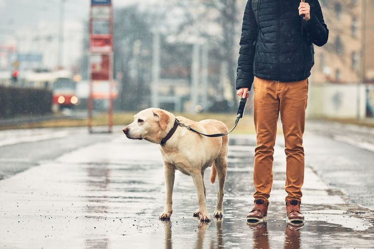 Low section of man with dog on wet street in city