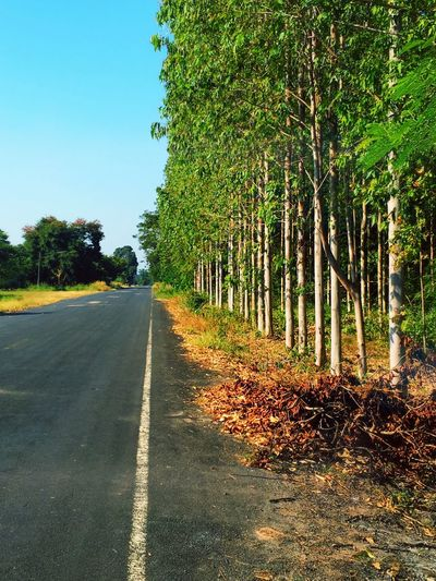 Road to no where. Spotted In Thailand Perspective Trees Focal Point Nature Photography Learn & Shoot: Balancing Elements Trees And Sky Nature Green And Black Shot By IPhone6s Plus