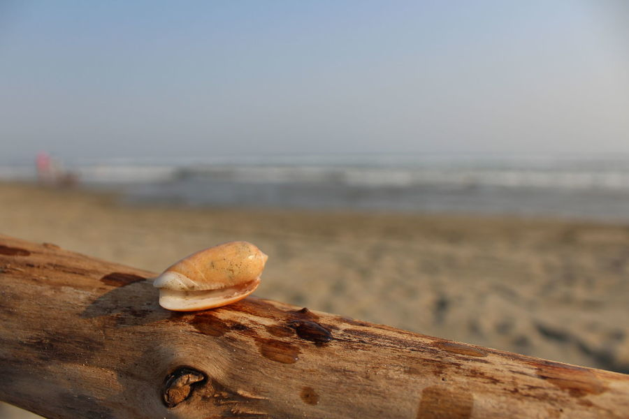 Beach Beauty In Nature Close-up Day Focus On Foreground Horizon Over Water Nature No People Outdoors Sea Seashell Shell Sky Water