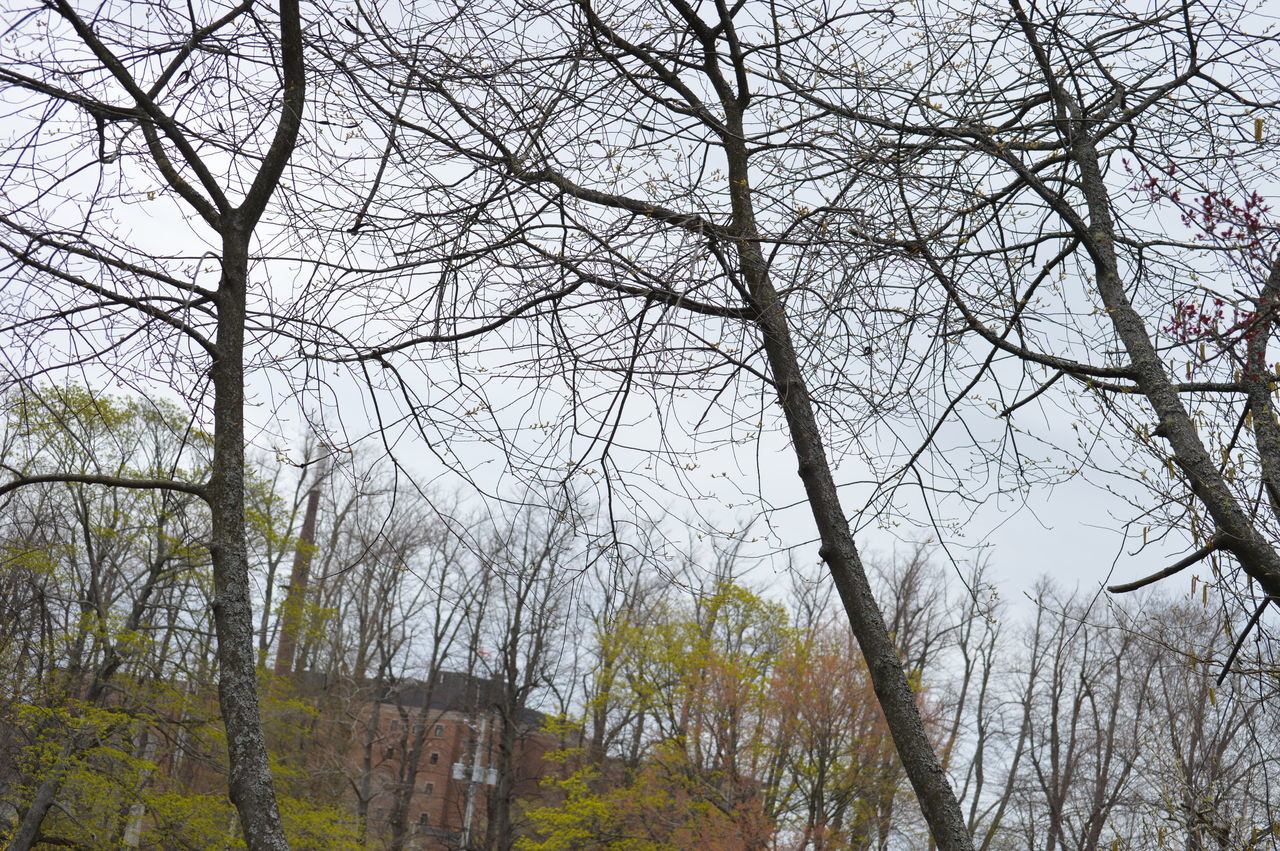 tree, bare tree, branch, low angle view, outdoors, day, nature, no people, sky, beauty in nature, growth