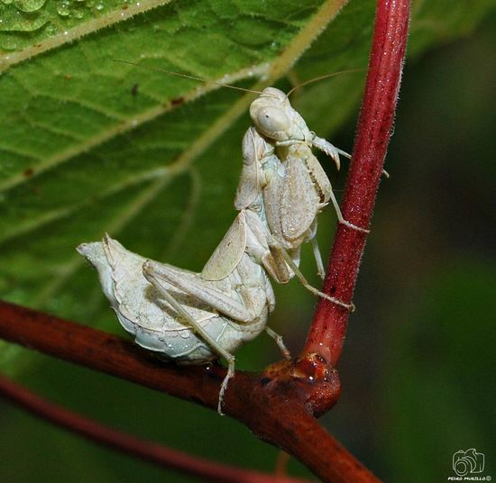 Prayingmantis Animal Animals Looking At Camera Nature Plant Flower Insects  Sun City Perching Insecto Animalphotography NikonD60 Nikon Plant Leaf Insect Close-up Animal Themes Animal Eye Grasshopper Chameleon Dragonfly Leg Climbing Lizard Spider Reptile Ant