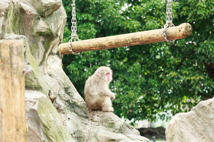 Monkey sitting on rock formation