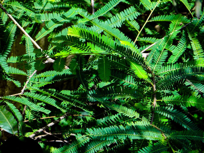 NATURAL PATTERNS Rich Green Tones Nature Natural Pattern Greenery Scenery Lush - Description Lush Foliage Tree Leaf Backgrounds Full Frame Close-up Plant Green Color Leaves Young Plant Greenery Leaf Vein Plant Part Flora Lush Countryside Relaxing Moments
