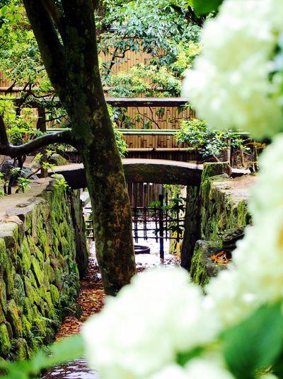Japanese Garden Traveling Japan Kyoto, Japan 詩仙堂 Eye4photography  A Rainy Day
