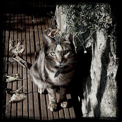 Tibble Cat