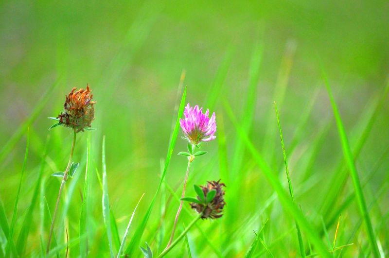 Flower Flowering Plant Plant Animal Animal Themes Beauty In Nature Animal Wildlife Freshness Insect Nature Invertebrate Close-up Fragility Animals In The Wild Grass Vulnerability  Green Color One Animal Petal No People Flower Head Outdoors Springtime Pollination Animal Wing