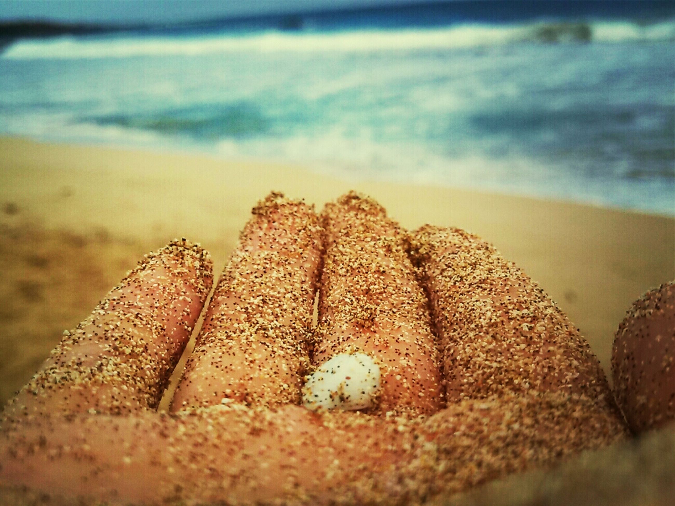 beach, sand, sea, shore, focus on foreground, seashell, close-up, selective focus, nature, animal shell, pebble, tranquility, water, shell, rock - object, surface level, outdoors, beauty in nature, day, stone - object