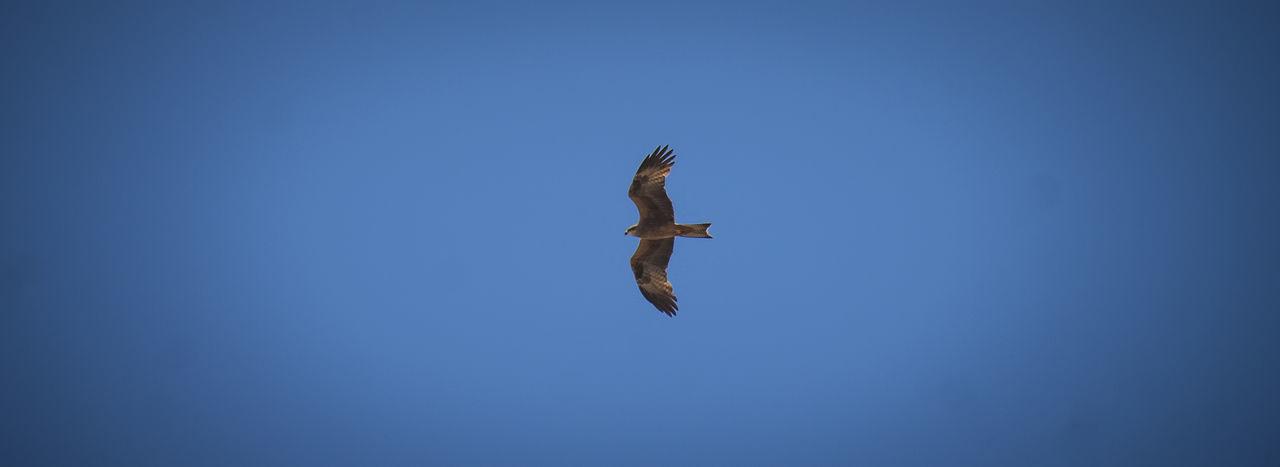 Aves Aves 🐥🐤🐥 Freedom Linares Pajaros Pajaros Volando