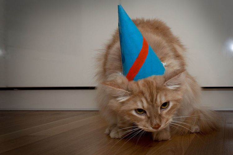 Close-up portrait of a cat wearing party hat