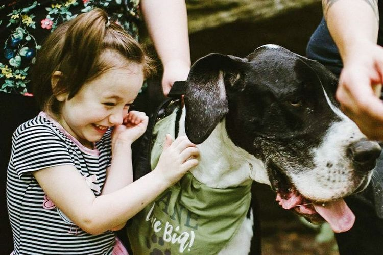 Great Danes Happiness Kids Being Kids Kids Playing Kids And Dogs Kid And Dog Kid And Nature Dog Pets Animal Togetherness Love Domestic Animals Animal Themes Friendship Outdoors Collection Tickled Great Dane With Child Size Comparison Summer Black And White Exceptional Photographs Happiness Bonding Outdoors