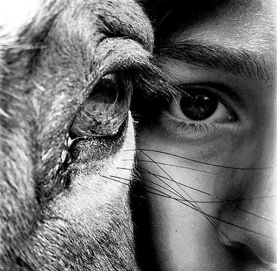 Horses Blk N Wht Blackandwhite Sillouette Eye4photography  Horseeye