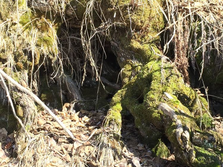 Nature No People Outdoors Sunlight Day Growth Water Beauty In Nature Forest Close-up Tree Mossy Tree Moss Tree Roots