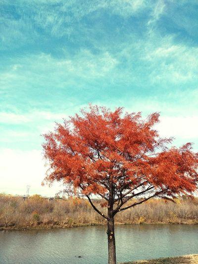 Tree No People Silence TreePorn Bythewater Simplicidade Archetype