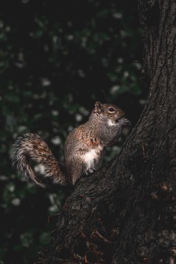 Squirrel Park Outdoors Fluffy Mammal Nut Adorable Spring Summer Animal Wildlife Animal Themes Animals In The Wild Animal Tree One Animal Plant Nature No People Vertebrate Day Trunk Tree Trunk Mammal Outdoors Land Focus On Foreground Close-up Looking