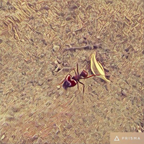Ant formiga Brazil Brasil Animal Themes Ant Brazil Brazil Ant Bras