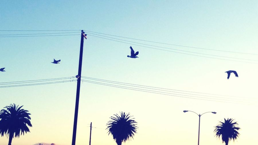 Seagulls Airport Fly Flight San Francisco SFBay Relaxing Taking Pictures Treethugger Naturerox