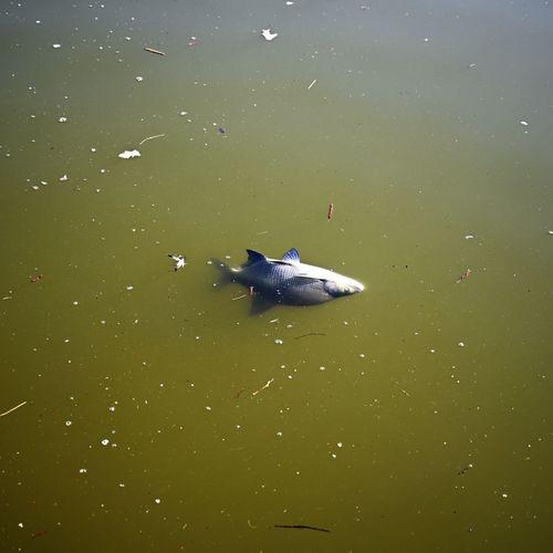 Upside down Fish Water Animal Wildlife Animals In The Wild Animal Animal Themes Swimming Nature No People Day Marine