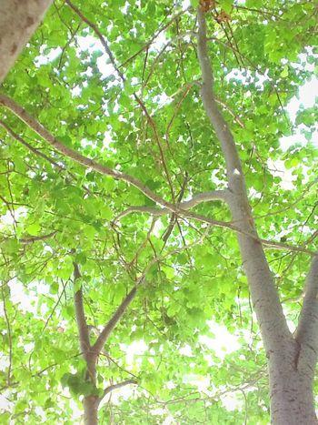TreePorn Green Beautiful Lighting Vintage Fade 😚