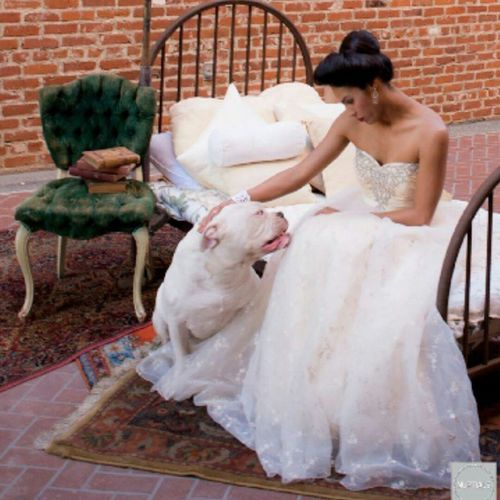 So happy I have these memories of Cain. Luckily he did a photo shoot with a San Diego Bridal Magazine right before he unexpectedly left us, they were doing a Victorian themed wedding shoot. R.I.P. Cain Oneofakindbulldogs Bulldogs Bulldog Oldeenglishbulldogges oldeenglishbulldogge oldenglishbulldogs oldenglishbulldog premierbreeder bulldogges oeb SoCal californiadreamin SanDiego SD ladiesman bigdaddy hermesbulldog wedding girlsbestfriend glamorous victorianbulldogs