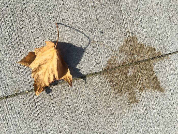 Autumn leaf and