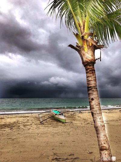 Weatheringthestorm Beachphotography Outsideofthecity Horizon Over Water Tranquility Sea Beach Water Cloud - Sky Sky Tree Beauty In Nature Scenics Nature Sand Tree Trunk Tranquil Scene Outdoors Day No People Palm Tree