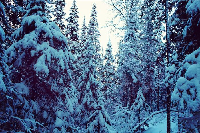 Snow Nature Forest Beautiful