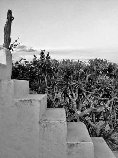 Stairs of age Tree Outdoors Plant Nature Cactus Cactuslover Stairs Staircase Blackandwhite Behappy Peaceful View Black & White Photography Blackandwhite Photography DayTimePhotography Black And White Friday