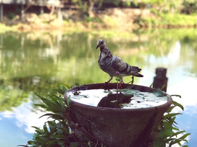 EyeEmNewHere Lovely Bird Bird Animal Themes One Animal Water Nature Outdoors Country Life Riverside