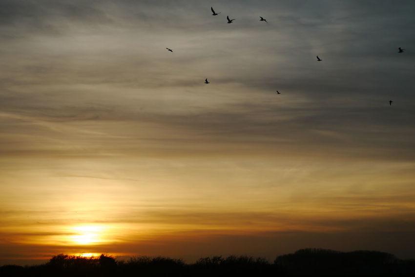 Panasonic DMC-G3   F/5   1/250 sek   ISO-160   51 mm EyeEmNewHere Sunset Birds Art Is Everywhere The Great Outdoors - 2017 EyeEm Awards BYOPaper! Live For The Story