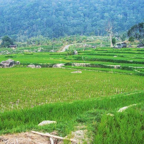 Tolakimporberas Pertanyaannya : Apakah di INDONESIA memang benar-benar ada yg namanya el nino? karna dalam kurun waktu 5 tahun belakangan, di sumatera dan jawa iklimnya gini-gini aja... musim hujan, kemarau, musim tanam.... musim asap... atau el nino ini cuma isu yg dibesar-besarkan, biar jadi proyek.... KedaulatanPangan Foodsovereignty farm farmer peasant petani