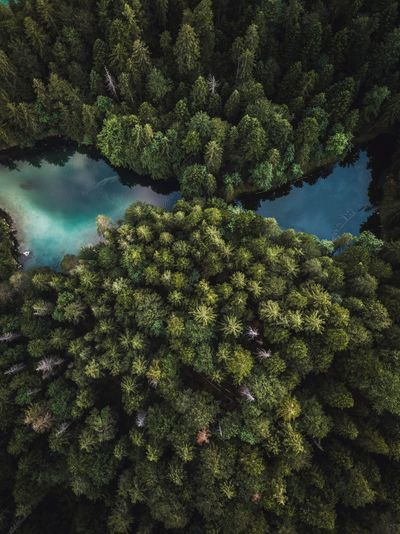 Aerial view of trees by lake in forest