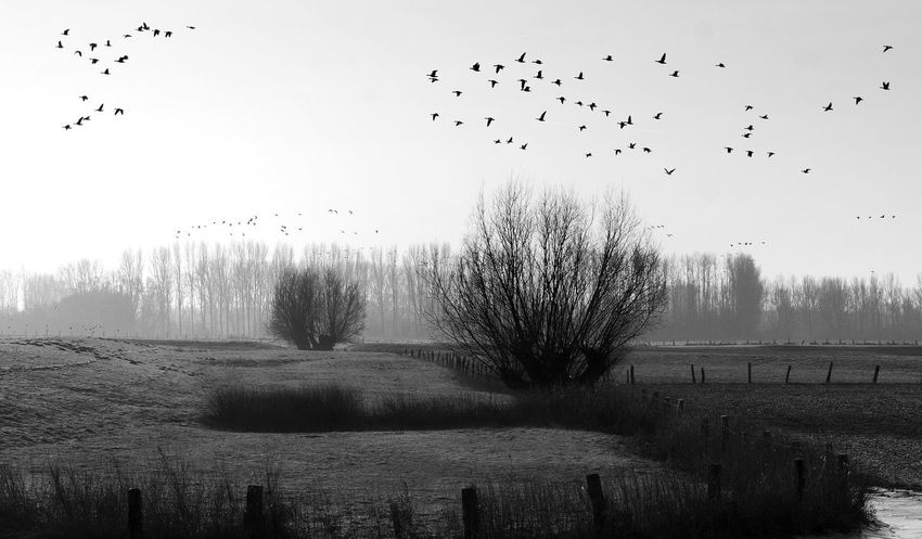 Bird Flying Autumn Black And White Morning Landscape Bare Tree Tree
