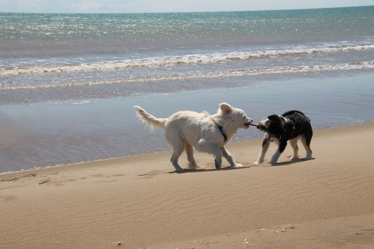 My dogs. Delta de l'Ebre (Cat.) Dogs Of EyeEm Dog❤ Beach Pets Water Outdoors Playing Nature Sea Photography Lovephotography  Lovephotographyandnature
