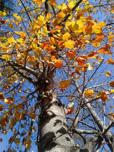 Tree Nature Autumn Branch Leaf Low Angle View Beauty In Nature Growth Day Outdoors No People Backgrounds Full Frame Sky Close-up