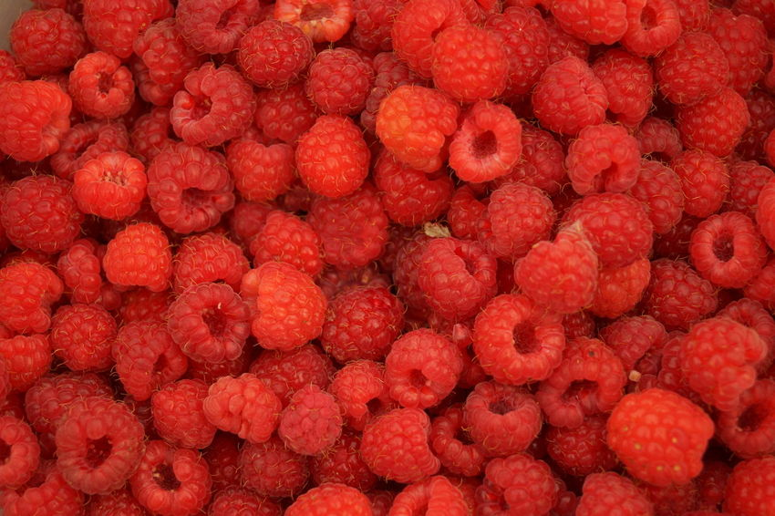Fruit Backgrounds Red Full Frame Close-up Food And Drink Berry Fruit Berry Strawberry Cranberry Rowanberry Tart - Dessert Fruit Salad Yogurt Ripe Juicy Raspberry Blackberry Kiwi - Fruit Blueberry Blackberry - Fruit Strawberry Ice Cream Granola Red Currant