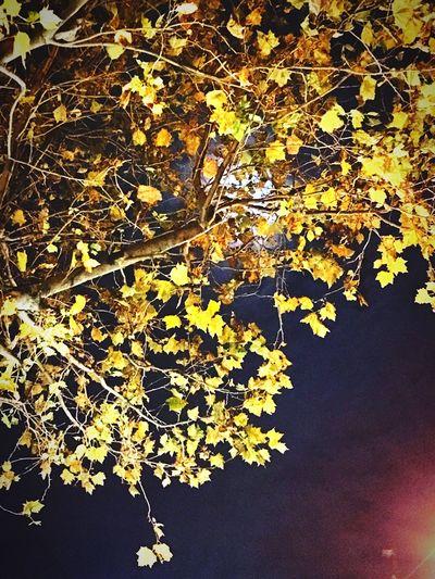 Moonlight Beutiful Night City