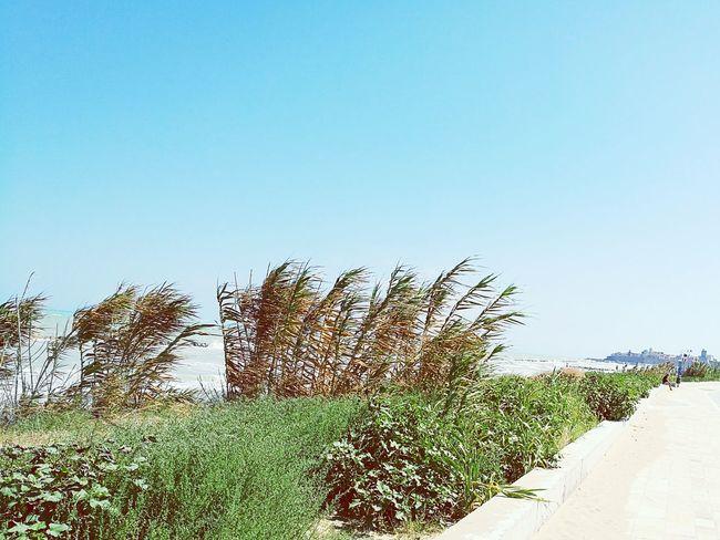 Taking Photos Enjoying Life Sky And Sea Relaxing Nice Atmosphere Summer Time  Enjoying Life Termoli  Castello Svevo Termoli