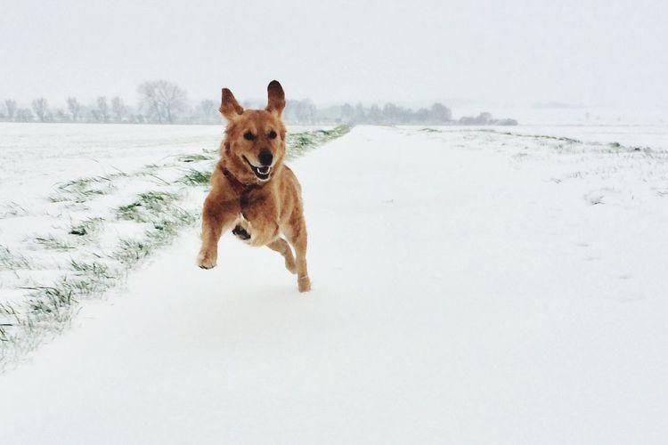 Greta Dog Cold