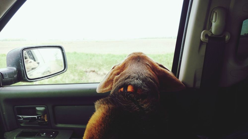 Car Transportation Vehicle Interior Window One Animal Car Interior Mode Of Transport Road Trip Land Vehicle Off-road Vehicle Looking Through Window Travel Day Mammal Driving Dog Rural Scene Animal Themes No People Pets