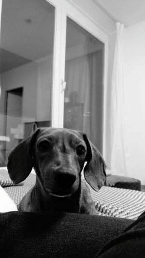 EyeEm Selects Dog Pets Domestic Animals One Animal Animal Themes Mammal Home Interior