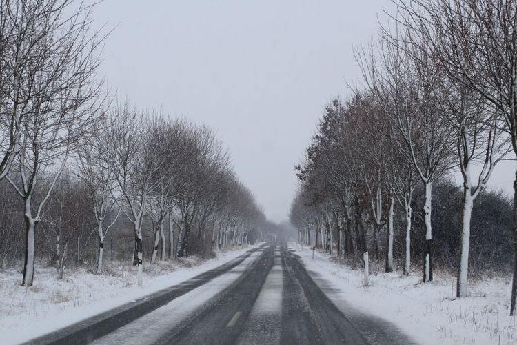It has become winter - it is snowing - bad road conditions Tree Cold Temperature Snow Winter Bare Tree The Way Forward Road Nature Sky No People Beauty In Nature Day Scenics - Nature Outdoors Snowing Tranquility Direction Diminishing Perspective Land Treelined Transportation Wintertime Road Conditions
