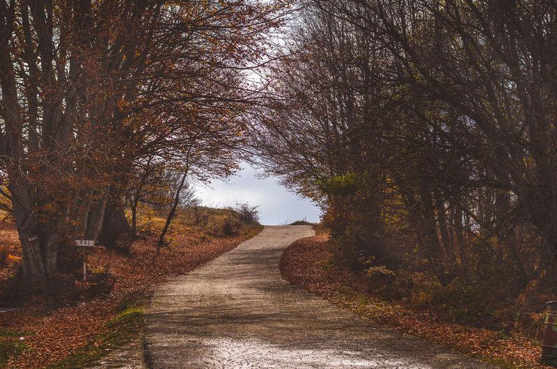 Autumn Bare