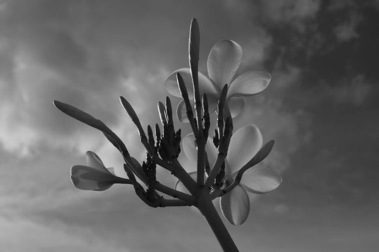 Plant Close-up Growth Flower Outdoors Nature Beauty In Nature No People Cloud - Sky Tree Sky Day