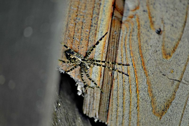 Close-up of spider on damaged wood