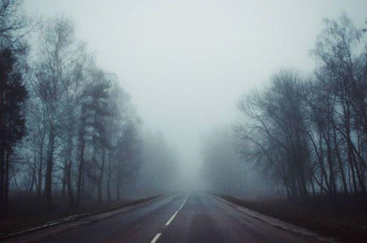 Road Roads Fog Travel Morning Nikon Nikon_photography_ Photo Friday Inmove Trees