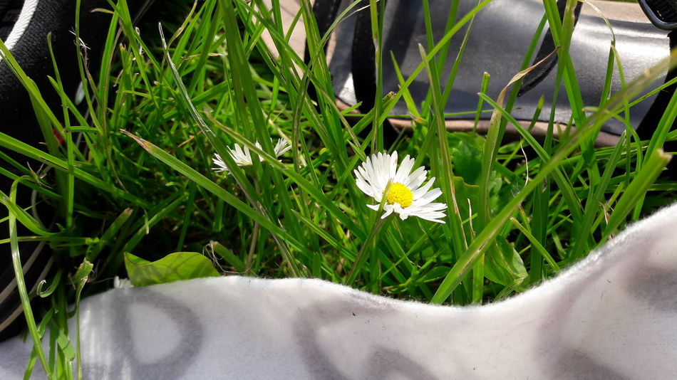 Flower Nature Freshness Plant Outdoors Day Growth Grass No People Flower Head Close-up Fragility Beauty In Nature Animal Themes